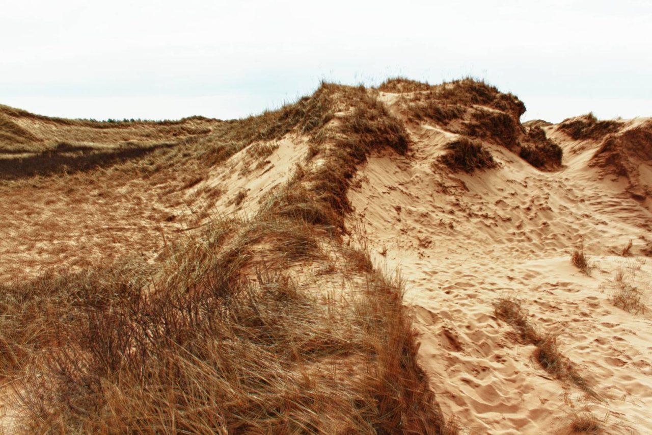 Desolate Dunes 2